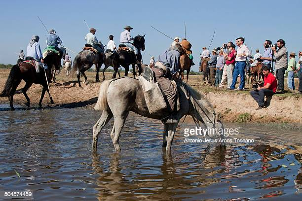 Rancher gives drink to his horse, surrounded by riders, photographers and people watching during transfer Broncos from the marshes of the Doñana...