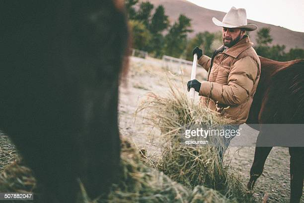 rancher shovels hay to feed horses in western pasture - ranch stock pictures, royalty-free photos & images