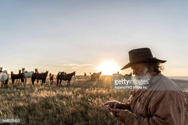 rancher uses smart phone at daybreak, horses behind - rancher stock pictures, royalty-free photos & images