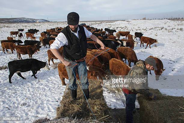 Ranchers Tucker Dunbar and his father Andy Dunbar feed their cattle on their private land completely surrounded by a federal wildlife refuge near...