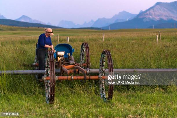 Ranching woman repositions irrigation pipes, mountain ranch