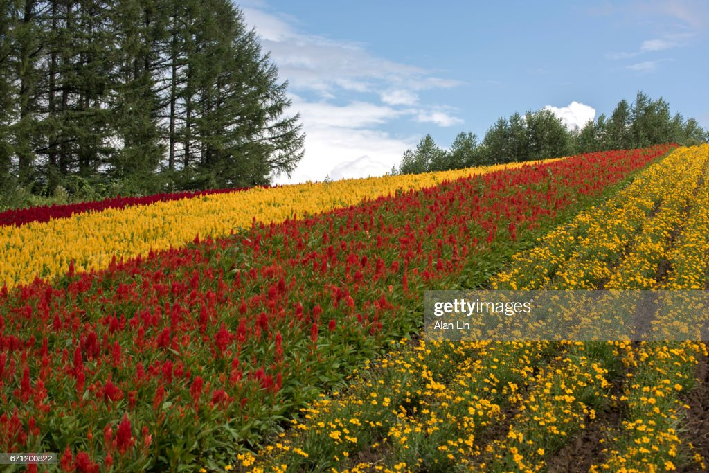 A Random Farm With Some Beautiful Flowers Stock Photo | Getty Images
