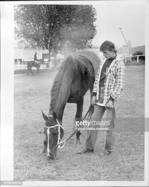 Randwick TrackworkStrapper Peter Marshall gives Doncaster Favourite Anon Angel a pick after today's work April 4 1985