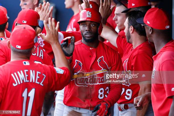 Randy Arozarena of the St Louis Cardinals is congratulated by teammates after scoring a run against the Washington Nationals during a spring training...