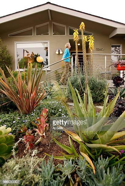 Randy Bergman walks to the front door of her home in the Cheviot Hills neighborhood of Los Angeles Bergman's front yard is very drought tolerant with...