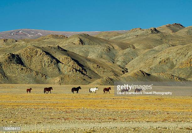 range country of the Altai Region, Mongolia