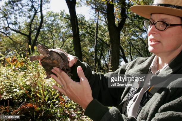 A ranger holding a Eastern box turtle at the Douglas Center for Environmental Education