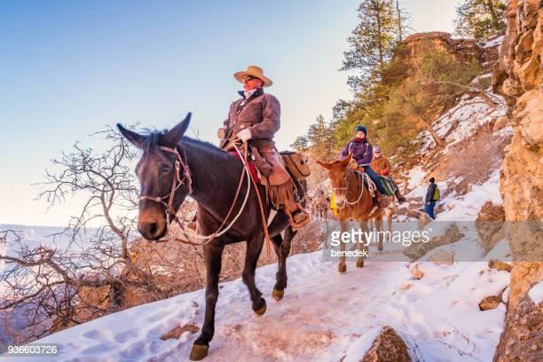 ranger leads mule ride adventure tour in grand canyon arizona usa - mula imagens e fotografias de stock