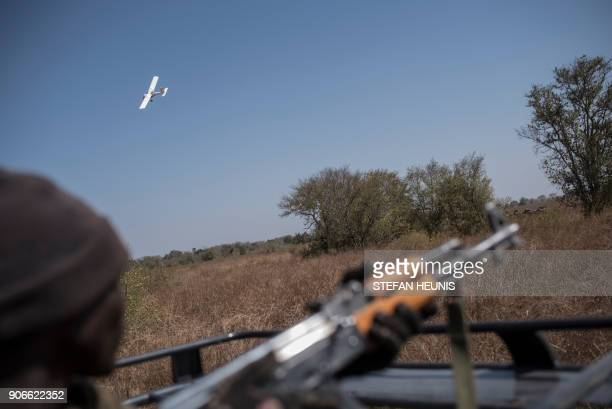 A ranger looks on as a microlight aeroplane flies over a herd of elephants during an elephant collaring exercise at Pendjari National Park near...