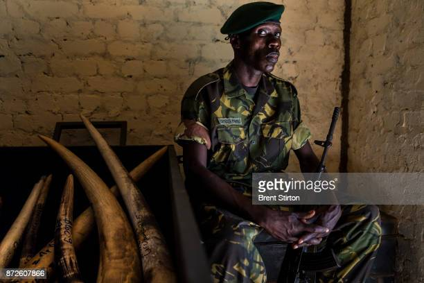 Ranger officer Mambo inside the ivory storage locker at Garamba National Park in the DR Congo This ivory is the prize that notorious rebel group the...