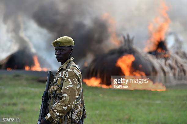 A ranger stands guard the site of burning ivory and rhino horn in Nairobi Kenya on April 30 2016 Kenya on Saturday torched at least 105 tons of ivory...