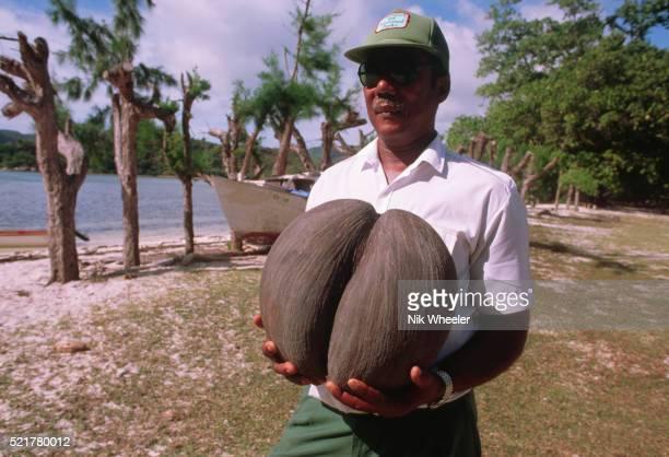 ranger with coco-de-mer - coco de mer stock pictures, royalty-free photos & images