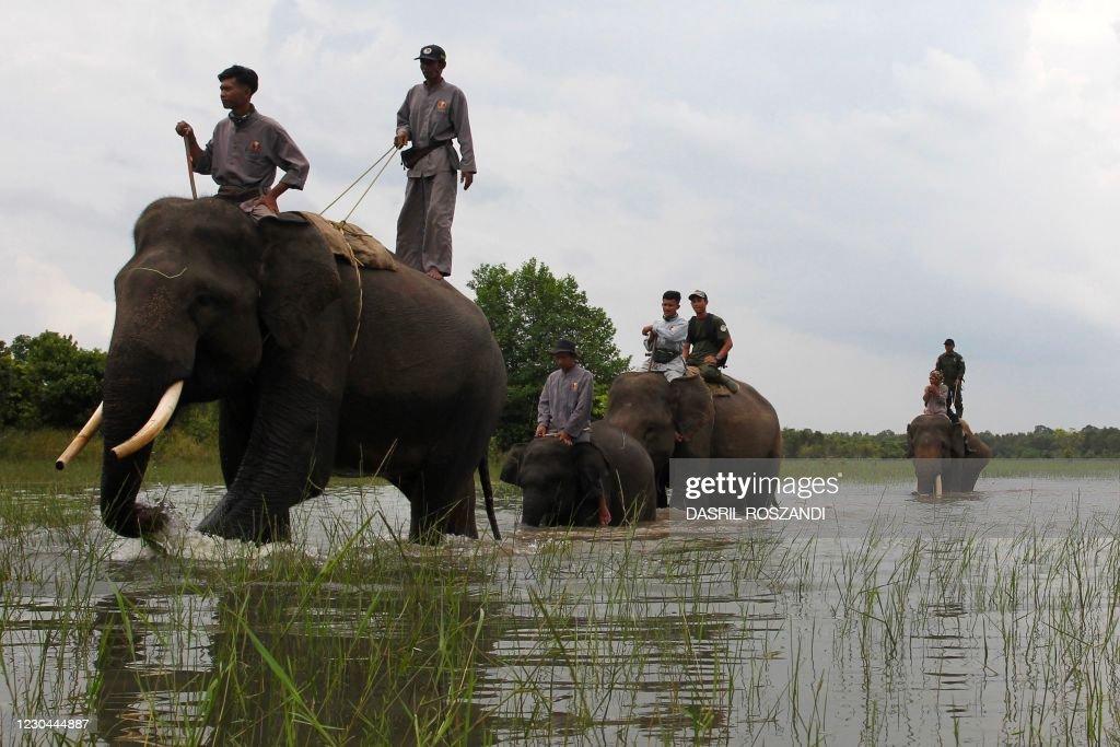 TOPSHOT-INDONESIA-WILDLIFE : News Photo
