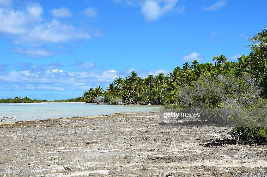 Rangiroa - Bird Island : Foto de stock