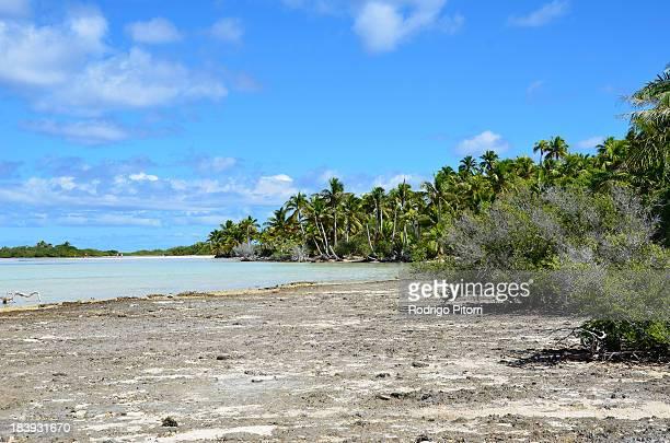 rangiroa - bird island - rodrigo pitorri stockfoto's en -beelden