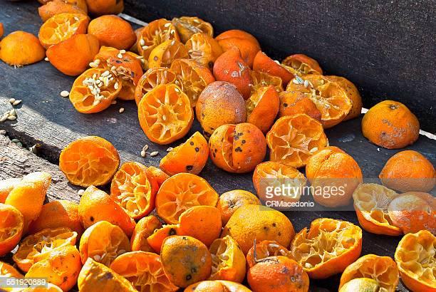 rangpur, citrus × limonia - crmacedonio fotografías e imágenes de stock