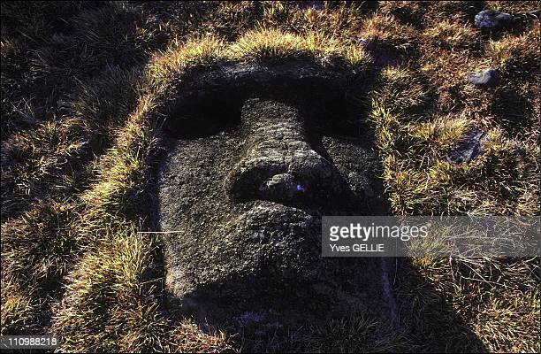 Rano Raraku Volcano Moai Head Buried In The Ground The Statues Were Carved From Rock Quarried On The Slopes Of The Volcano In Easter Island Chile In...