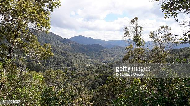 ranomafana national park - ranomafana national park stock photos and pictures