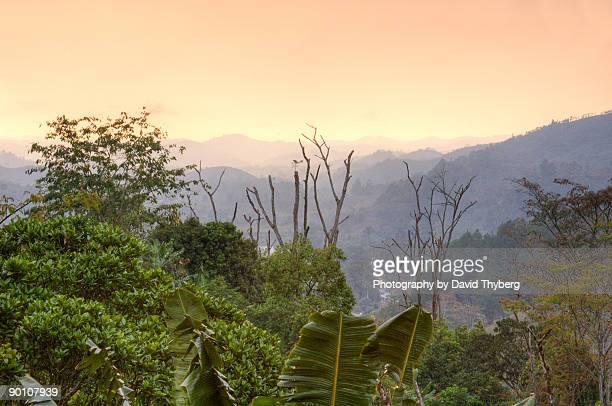 ranomafana valley - ranomafana national park stock photos and pictures