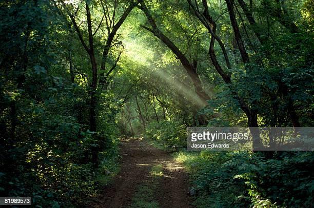 Ranthambhore National Park, India.
