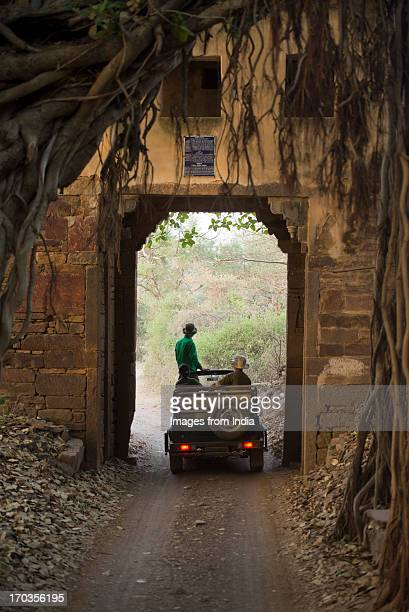 ranthambhore - ranthambore national park stock pictures, royalty-free photos & images