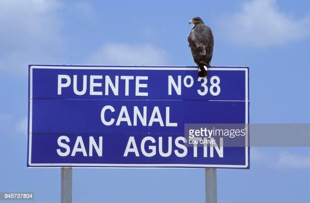 Rapace perch sur le panneau du pont 38 de la digue reliant le Cayo Santa Maria Cuba Rapace perch sur le panneau du pont 38 de la digue reliant le...