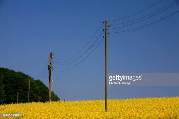 Rape field and power lines, eco-diesel from rape the energy of the future?, Lufigen, Zurich, Switzerland