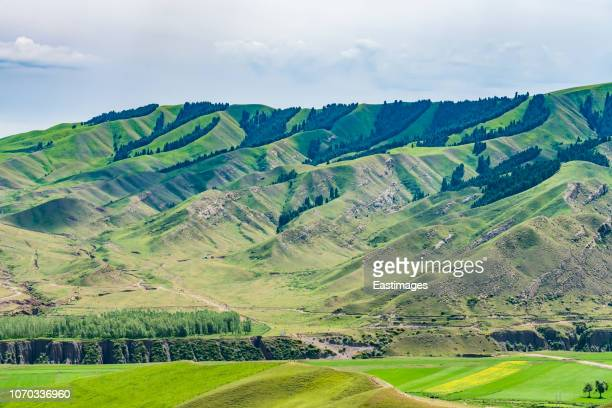 rape field beneath tian shan mountains, xinjiang china - tien shan mountains stock pictures, royalty-free photos & images