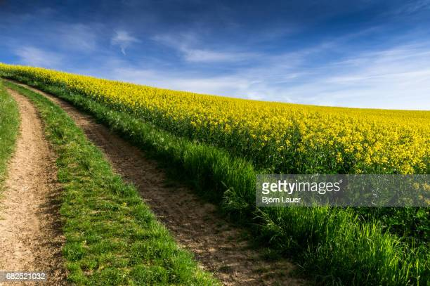rape field in kraichgau - der weg nach vorne stock pictures, royalty-free photos & images