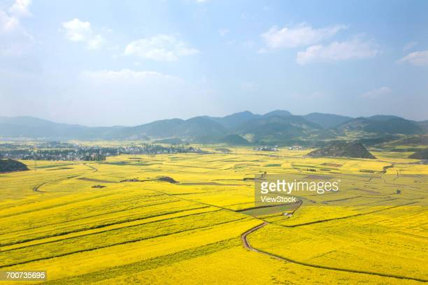 rape fields in luoping county, yunnan province, china - brassica stock photos and pictures