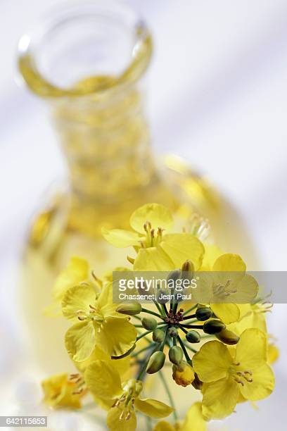 rape seed oil - canola oil stock pictures, royalty-free photos & images