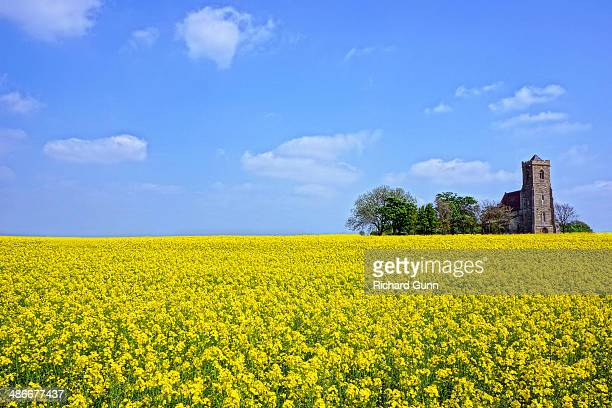 Rapeseed and Church, Spring in England