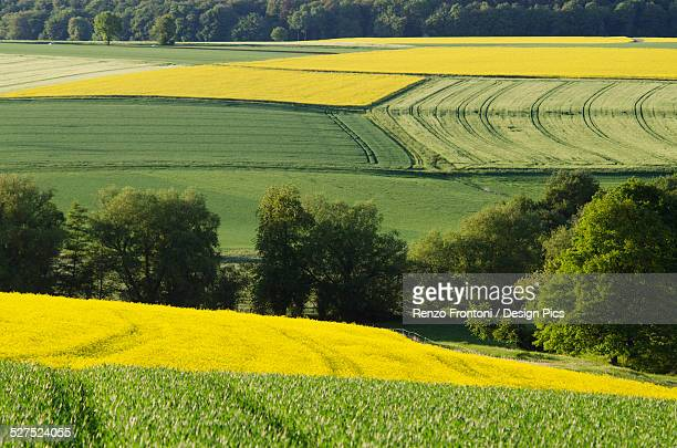 rapeseed and wheat fields in springtime - ヘッセン州 ストックフォトと画像