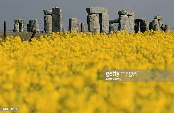 Rapeseed blooms in a field close to the ancient monument of Stonehenge on April 24 2012 near Amesbury England The vibrant yellow blossom of rapeseed...