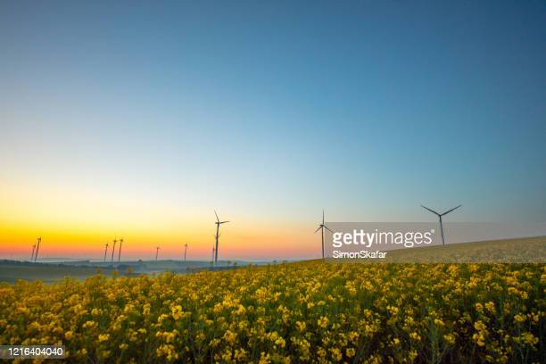 rapeseed field and wind turbines at sunrise - moody sky stock pictures, royalty-free photos & images