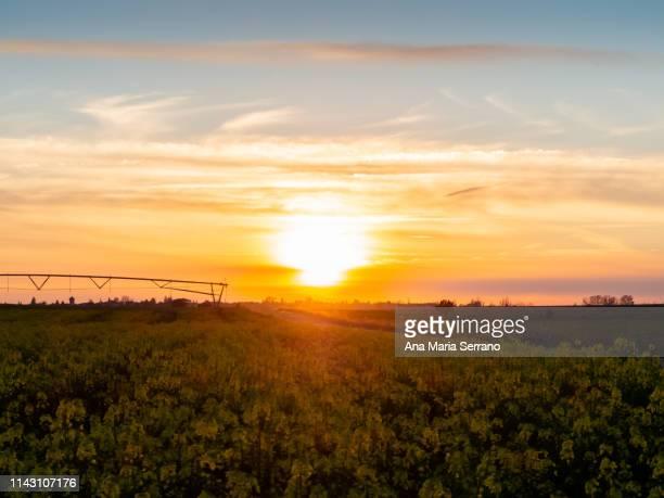 a rapeseed field in spring - salamanca imagens e fotografias de stock
