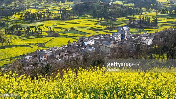 rapeseed fields and tangliwa village, luoping, qujing, yunnan, china - provinz yunnan stock-fotos und bilder