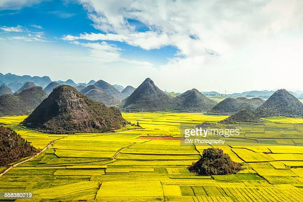 Rapeseed flower fields in China