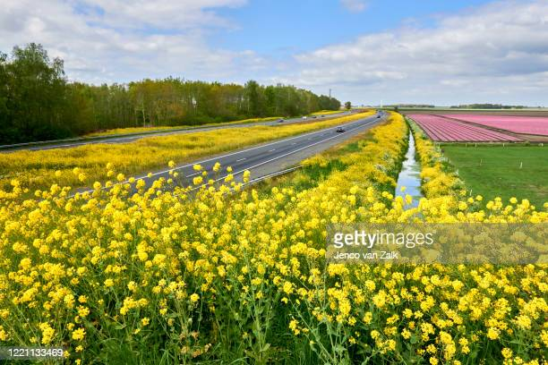 rapeseed on the roadside of the a6 motorway - 干拓地 ストックフォトと画像