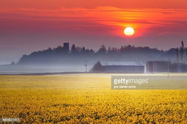 Rapeseed sunrise, Belmont Abbey, Hereford, England