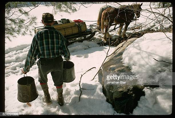 Raphael Howes carries two buckets with maple sap for sugaring on his family farm in Swift River Massachusetts Howes taps into maple trees to gather...