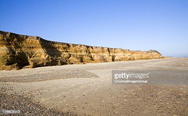 Rapid coastal erosion of soft cliffs between Benacre and Kessingland on the Suffolk coast England. The cliffs were formed by glacial outwash of sands...