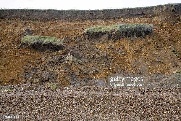 Rapidly eroding cliff of soft Red Crag rock at East Lane, Bawdsey, Suffolk, England.