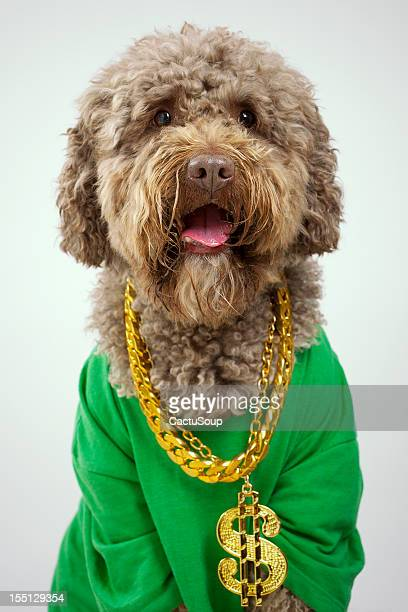 rapper dog - gold chain necklace stock pictures, royalty-free photos & images