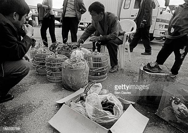 Rare birds pangolins monkeys and other wild animals are sold in the wildlife markets of Mongla a remote town on the border with China Much of the...