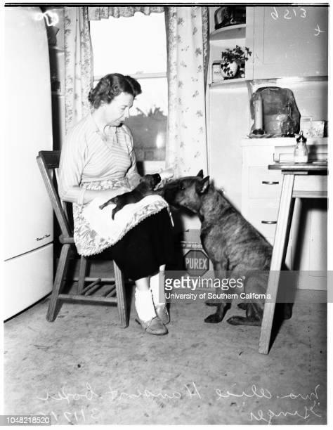 Rare Boxer litter 17 March 1952 'Ginger' Mrs Alice Hansen 3721 Dolphin Street San Pedro Supplementary material reads 'Daily Gershon City Desk Illus...