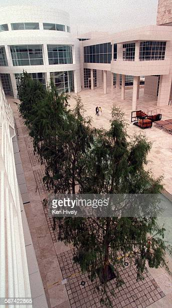 Rare Montezuma cypress trees planted at fountain area at the Getty Museum Photo/Art by^^^