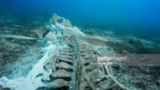 Rare Whale Skeleton Underwater