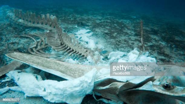 珍しいクジラの骨格を水中