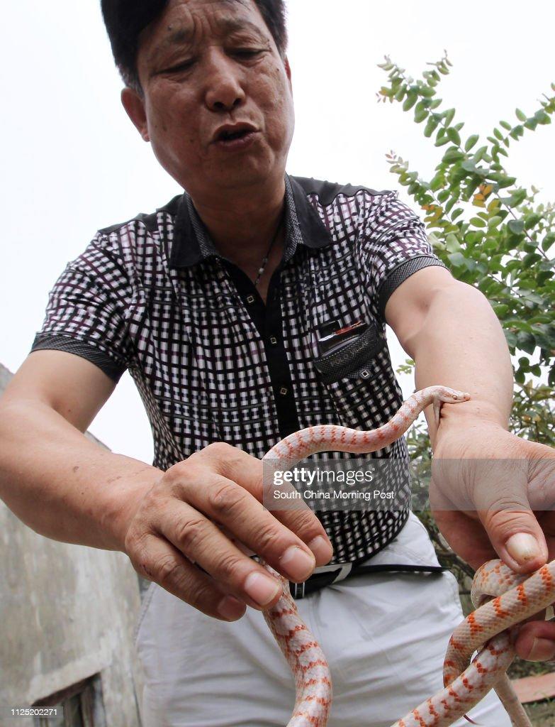 A Rare White Snake Bites Yang Hongchang Chairman Of The Moganshan News Photo Getty Images